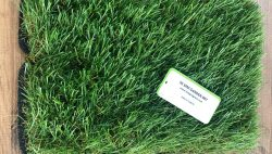 Artificial Lawn Prices