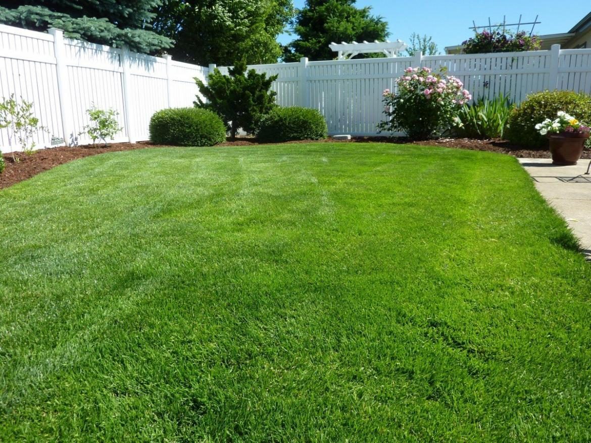 Synthetic Grass Reviews